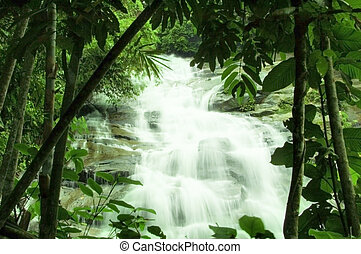 cachoeiras, floresta, verde