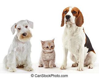 cachorros domésticos, animais, três, gato