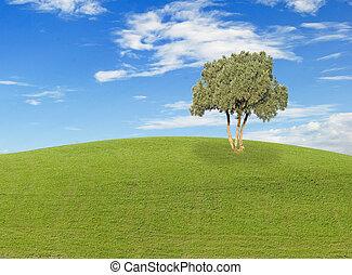 campo, árvore