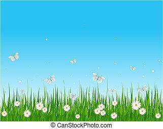 campo, gramíneo, borboletas