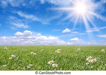 campo, primavera, ensolarado, sereno, prado