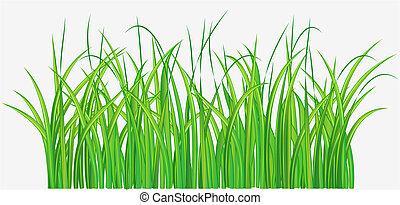 campo, verde, gramíneo