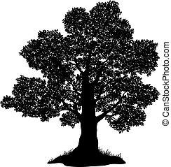 capim, silueta, árvore carvalho