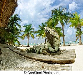 caraíbas, méxico, praia., iguana