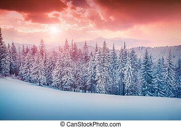 carpathian, montanhas., inverno, coloridos, cena