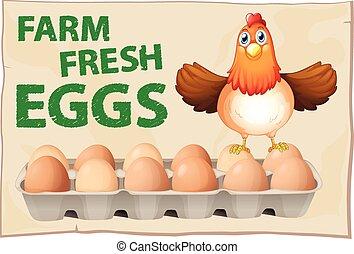cartaz, ovos