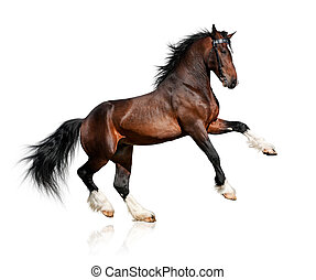 cavalo, baía, branca, isolado