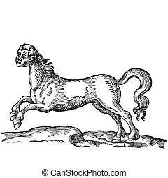 cavalo, cabeça, human