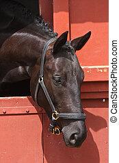 cavalo, cabeça, pretas