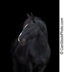 cavalo, pretas, cabeça