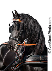 cavalo, pretas, cabeça, isolado