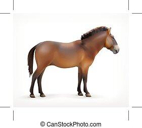 cavalo, vetorial, ícone