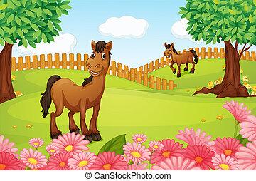 cavalos, campo
