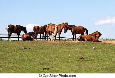 cavalos, liberdade