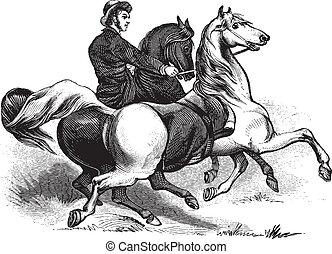 cavalos, montando, homem