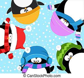 celebrando, pingüins, inverno