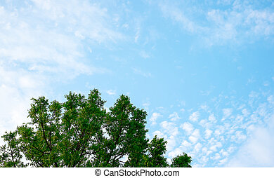 cima, céu, fundo, árvore verde, olhar, natureza