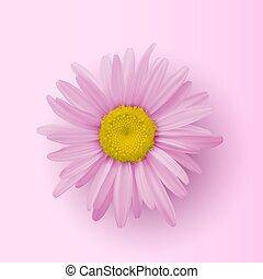 cima., coberturas, feriados, isolado, flor, fim, cartões, bandeiras, experiência., cor-de-rosa, cabeça, bonito, elemento, decoração, saudação, desenho, chamomile