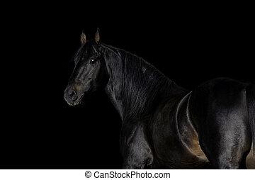 cima, pretas, fim, cavalo, fundo, cabeça