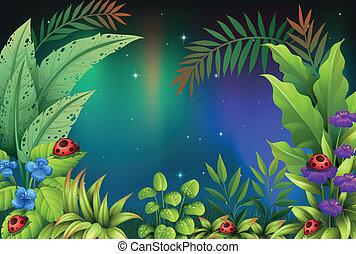 cinco, bugs, floresta amazônica