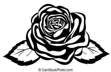 close-up, abstratos, rose., isolado, experiência preta, branca
