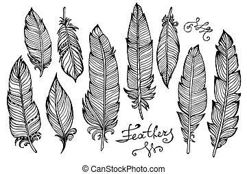 closeup, pássaro, mão, penas, isolado, grande, desenhado, jogo, branca
