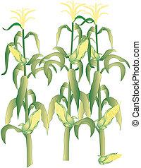 cob milho, ilustração, talos