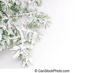 coberto, neve, ramo
