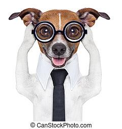 cobertura, cão, orelhas