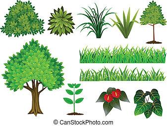 cobrança, árvore, planta