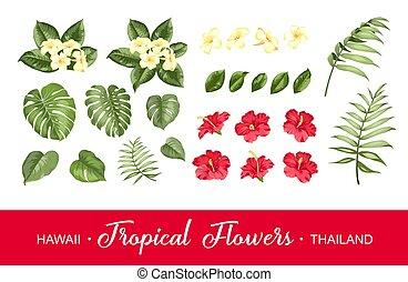 cobrança, fundo branco, jogo, flores, elements., tropicais