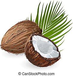 coco, leaf., natural, fruit.