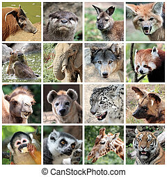 colagem, mamíferos, animal