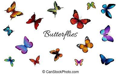 colorido, diferente, jogo, butterflies.