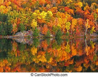 coloridos, outono