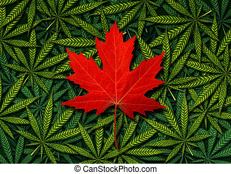 conceito, canadense, marijuana