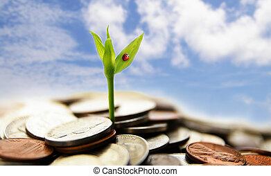 conceito, financeiro, moedas, -, crescimento, novo