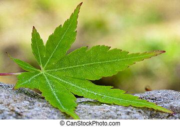 conceito, folha, natureza, árvore, outono, verde