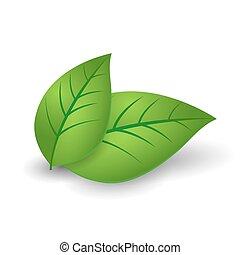 conceito, folhas, ecologia, verde, lustroso, ícone