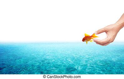 conceito, liberdade, mão, relase, fundo, goldfish, branca