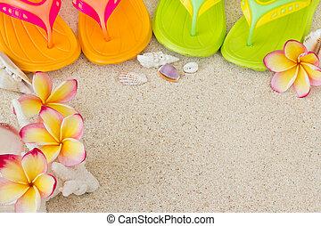 conchas, praia areia, verão, inverter, concept., fracassos, flowers., frangipani