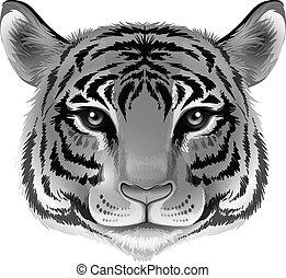 cor, cabeça tigre, cinzento