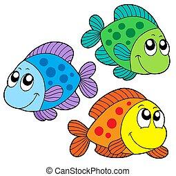 cor, cute, peixes
