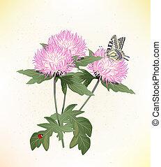 cor-de-rosa, borboleta, asters