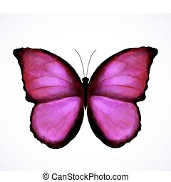 cor-de-rosa, borboleta, luminoso, vetorial, isolated.