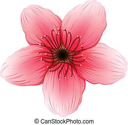 cor-de-rosa, five-petal, flor