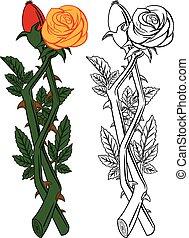 cor-de-rosa levantou-se, cortar flor