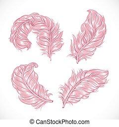 cor-de-rosa, luxuriante, macio, penas, isolado, avestruz, grande, fundo, branca