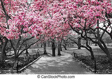 cor-de-rosa, parque central, pretas, flores, branca, paisagem