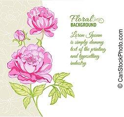 cor-de-rosa, peonies, amostra, fundo, texto
